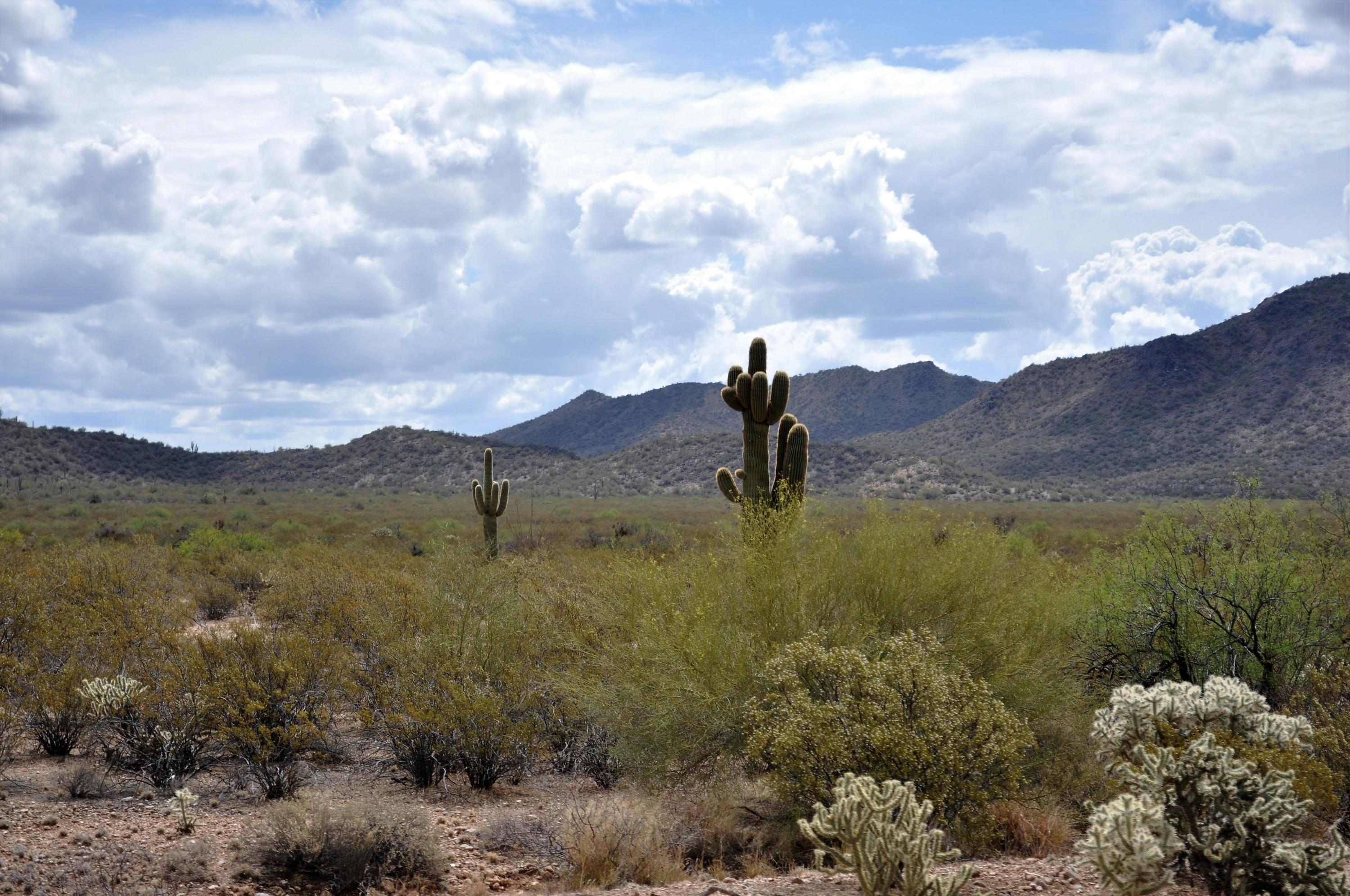 Arizona Trip 4
