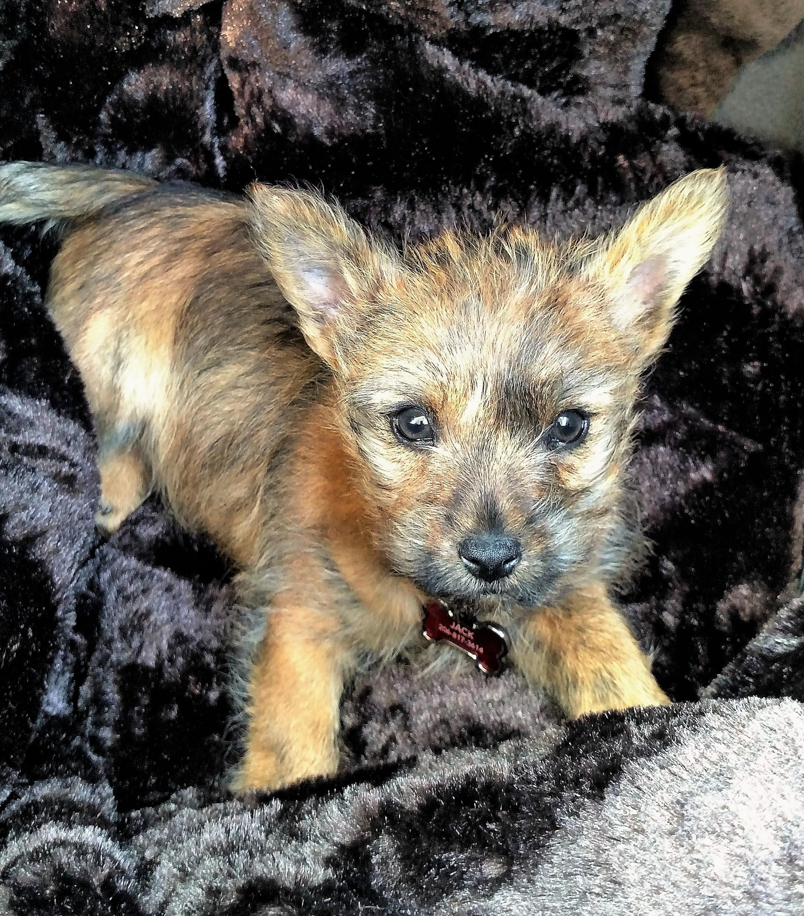 Jack Puppy Blanket