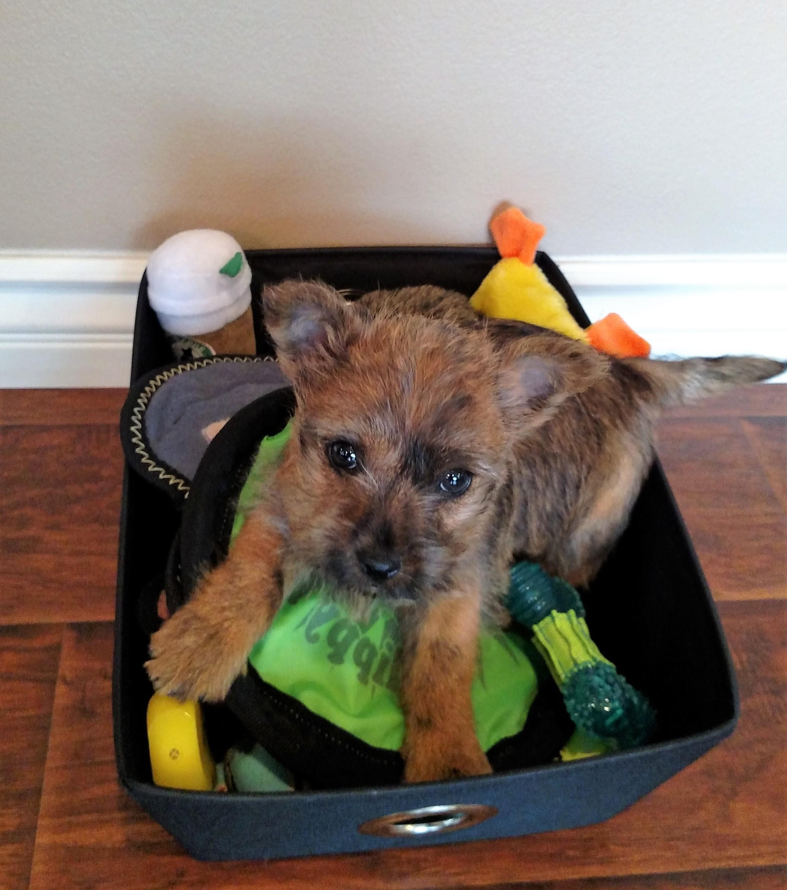 Jack in Toybox
