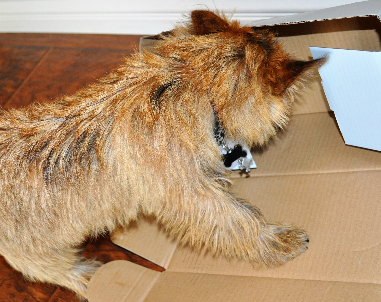 Dapper Dog August 2016 Jack Box Rip 2