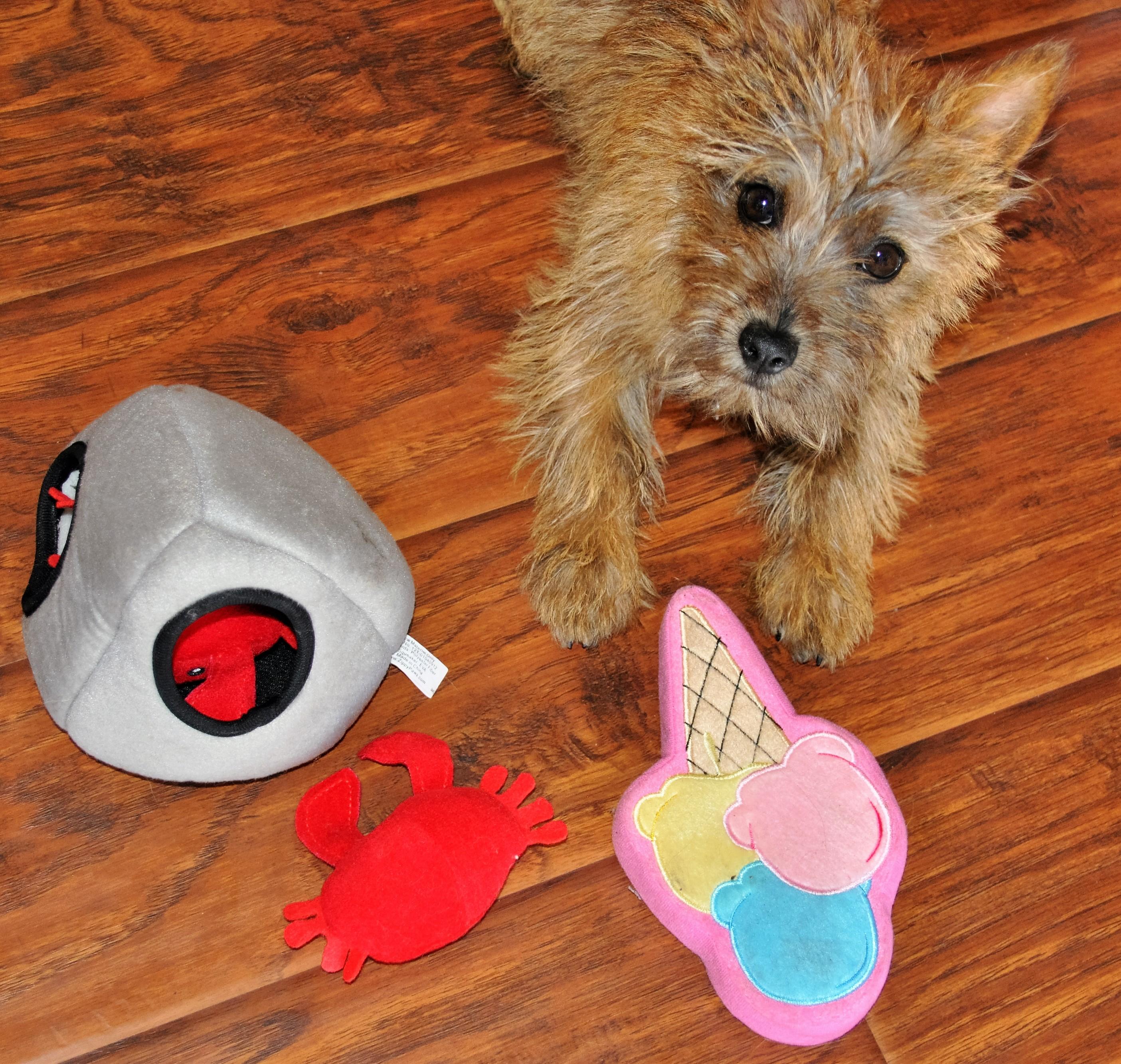 Dapper Dog August 2016 Jack Toys 3