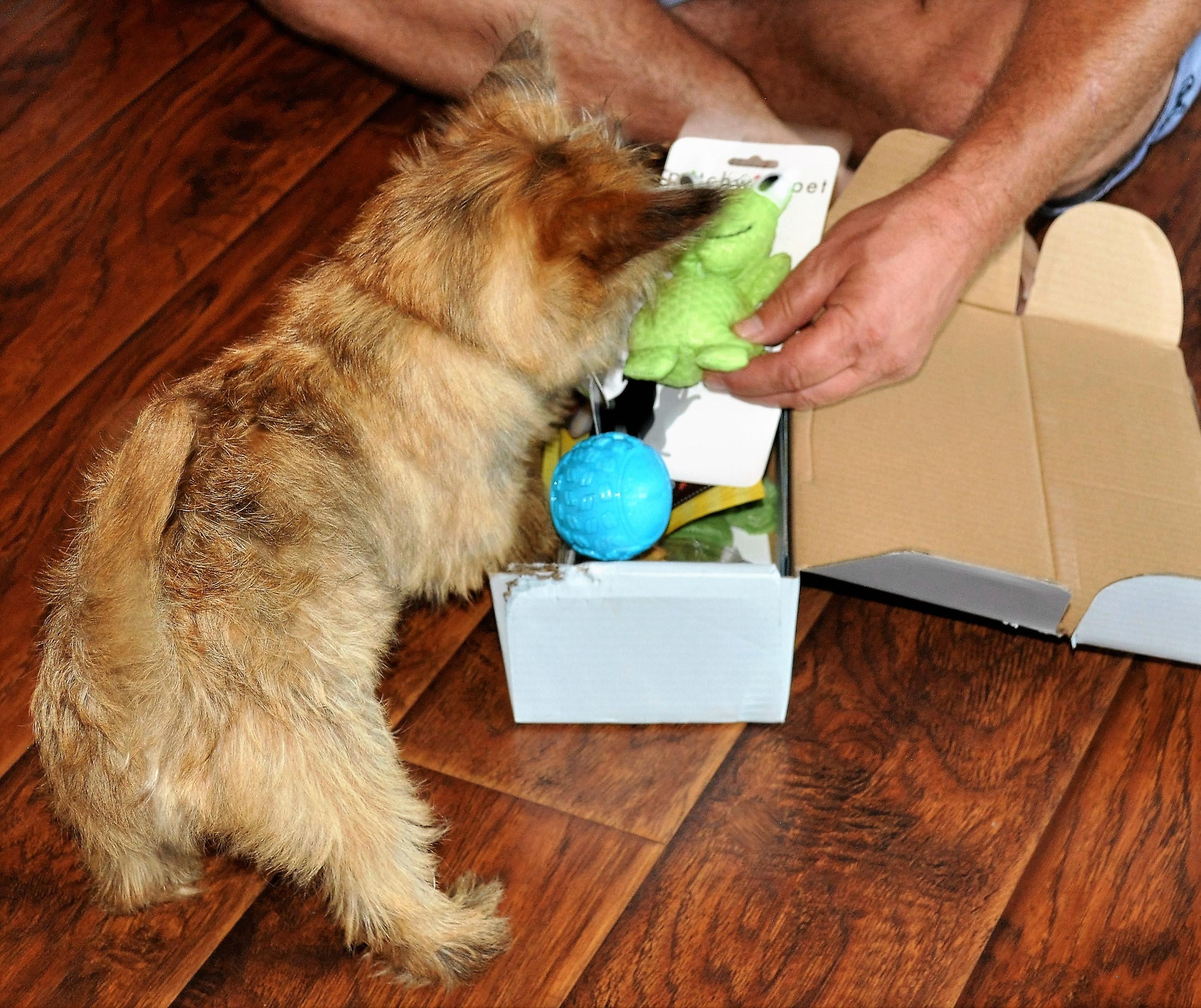 Dapper Dog July 2016 Jack Ball 1