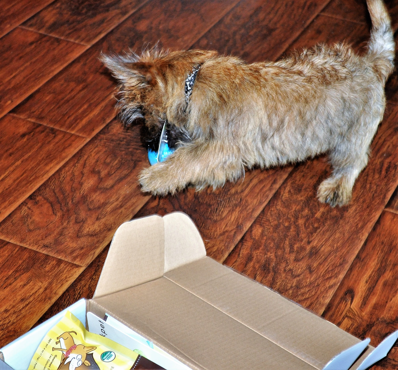 Dapper Dog July 2016 Jack Ball 3