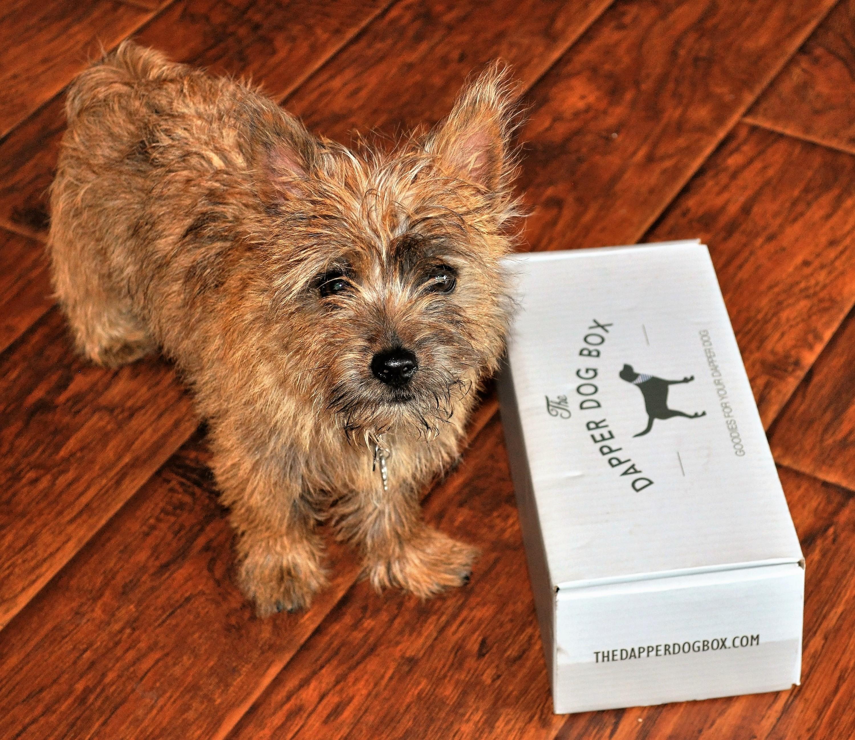 Dapper Dog July 2016 Jack Box 1
