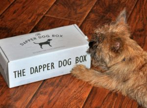 Dapper Dog Box