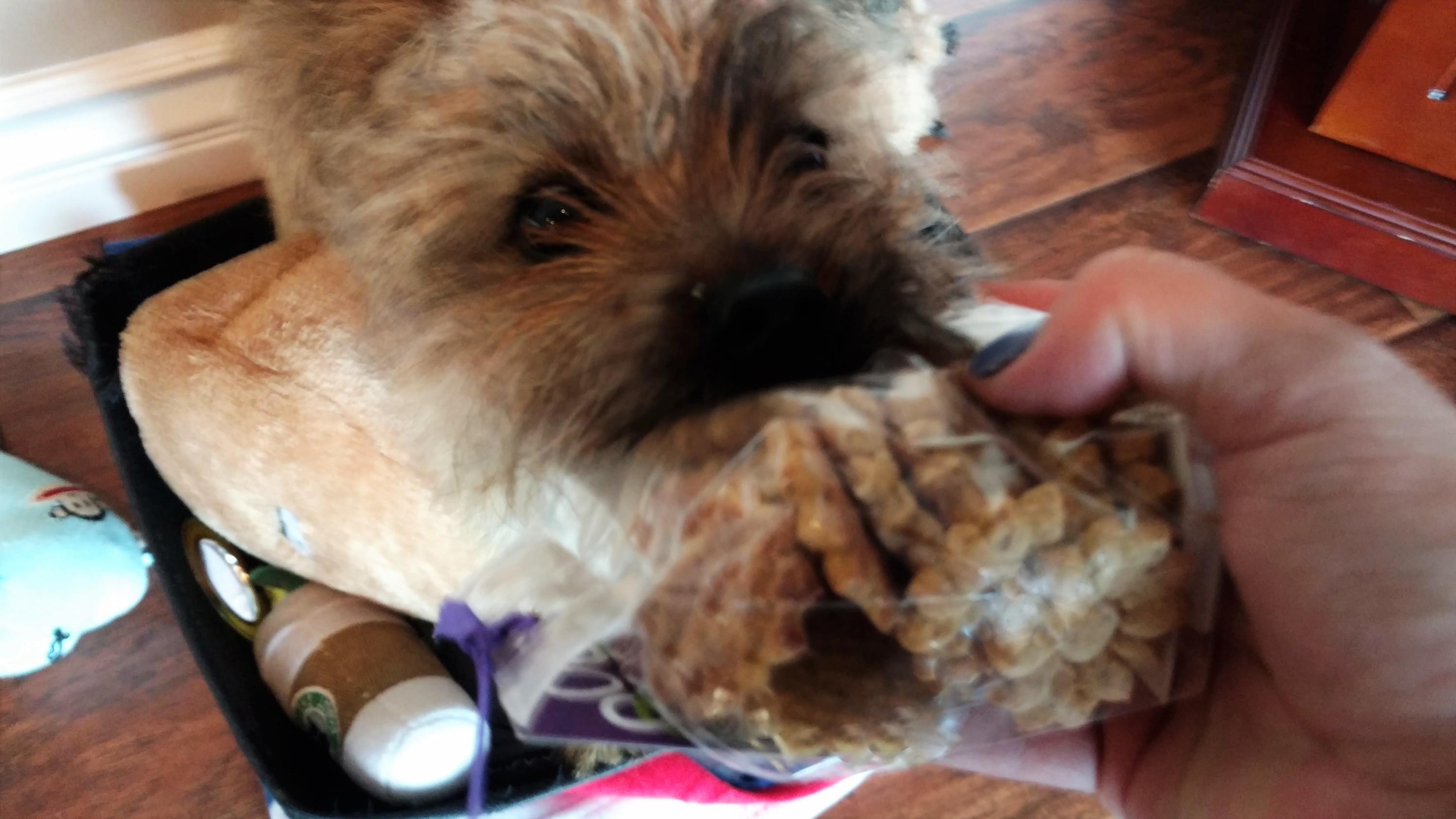 Dapper Dog July 2016 Jack Wants
