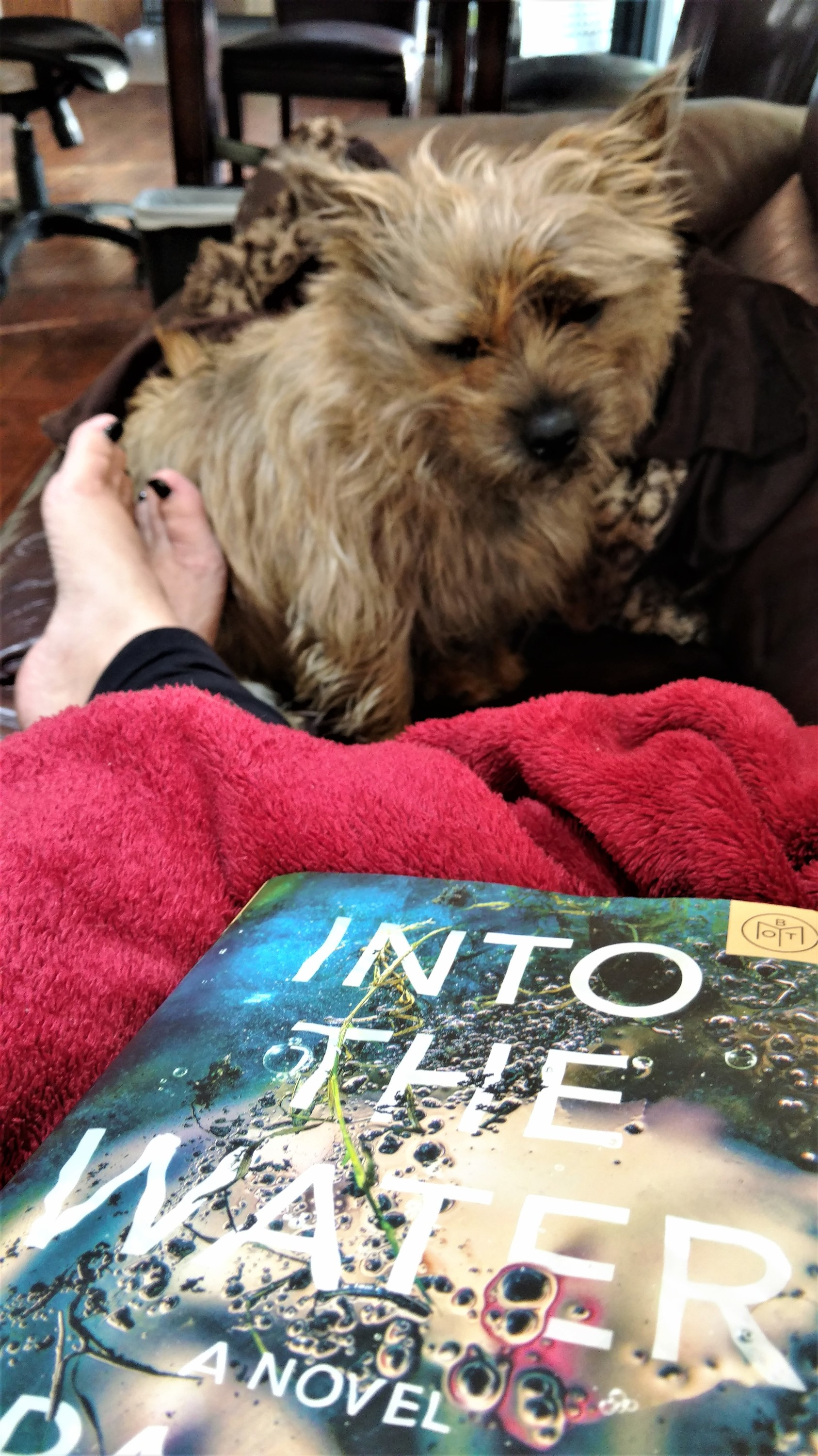 Into the water, Paula Hawkins, Cairn Terrier, Reading, Lazy Sunday